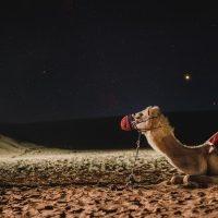 camel-4948299_1920